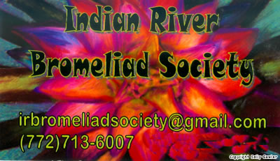 Contact Indian River Bromeliad Society